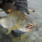 Mouse Pattern Fly Fishing Argentina